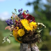 nest flowers