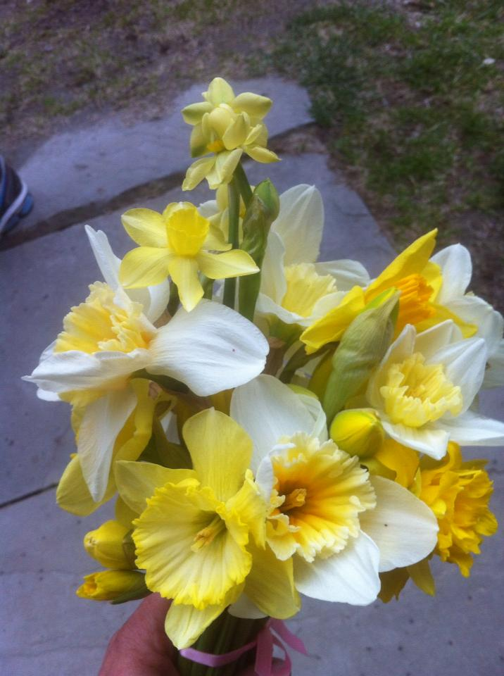 mixed daffs